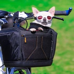 pet traveling