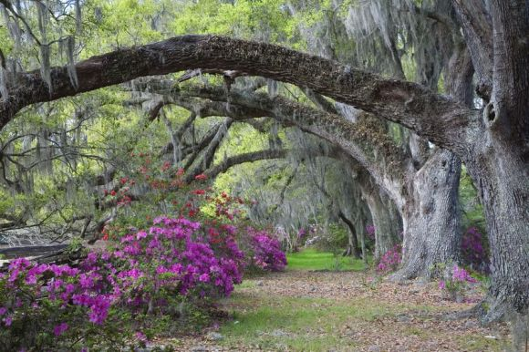 Plan A Getaway To Charleston South Carolina Travel With Red Roof