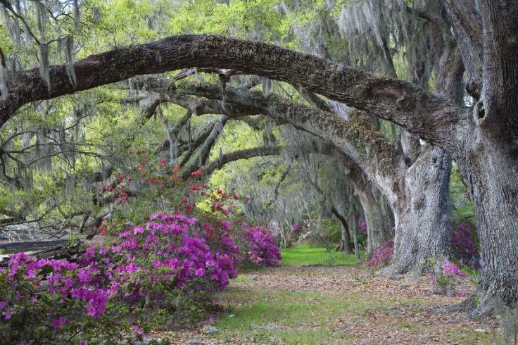Magnolia Plantation in Charleston, South Carolina.