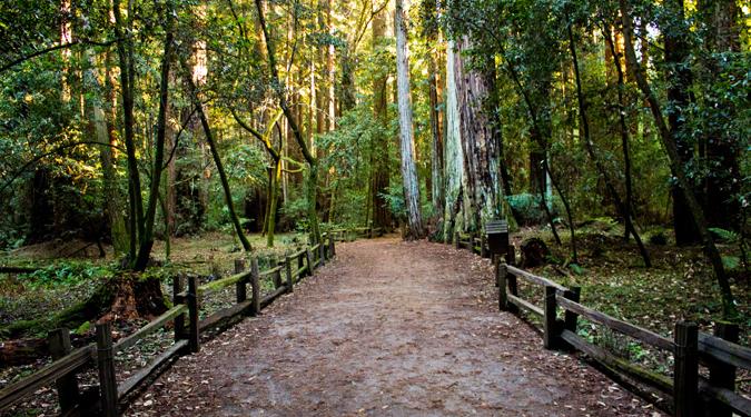 park trail hike image