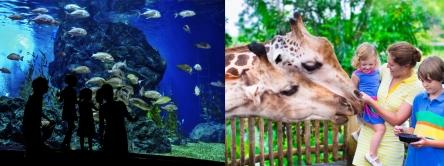 aqarium zoo carousel combo