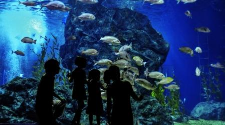 aquarium family image size