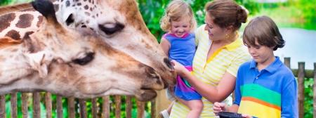 zoo family carousel